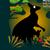 Bestioles : le kangourou